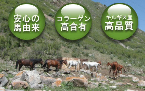 キルギスの馬